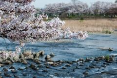 japon-2013-0536