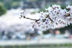 japon-2013-0538