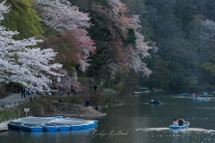 japon-2013-0551