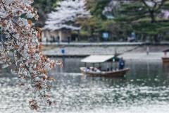 japon-2013-0572