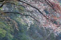 japon-2013-0604