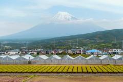 japon-2013-1640