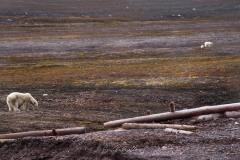 svalbart-2014-1260