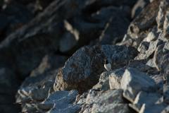 svalbart-2014-1695