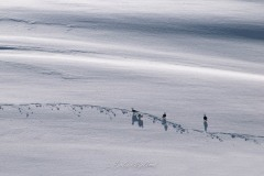 svalbart-2015-1060