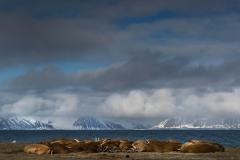 svalbart-2015-4932