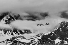 svalbart-2015-6028