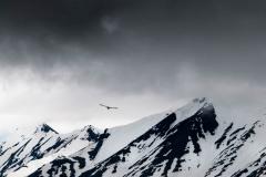 svalbart-2015-6298