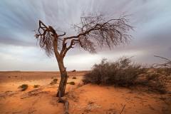 tchad-2013-4802