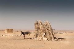 tchad-2013-4861