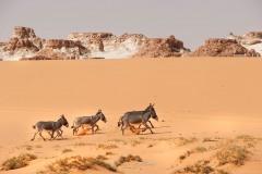 tchad-2013-5069