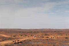 tchad-2013-5226