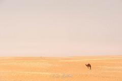 tchad-2013-5244