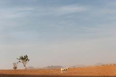 tchad-2013-5284
