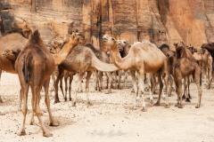 tchad-2013-5518