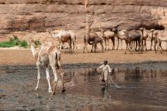 tchad-2013-5547