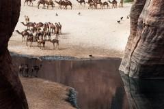 tchad-2013-5728