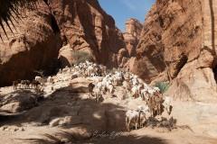 tchad-2013-5872