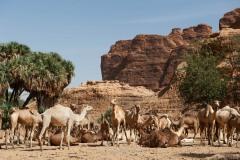 tchad-2013-5901