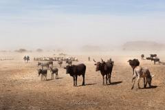 tchad-2013-5980