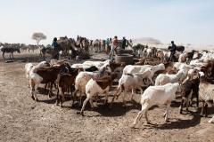 tchad-2013-5983