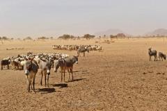 tchad-2013-6001