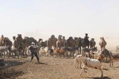 tchad-2013-6004