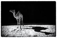 tchad-2013-6146