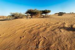 tchad-2013-6416