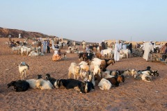 tchad-2013-6615
