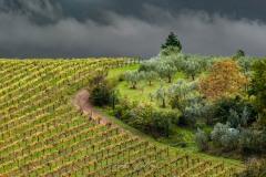 toscane-2013-0387
