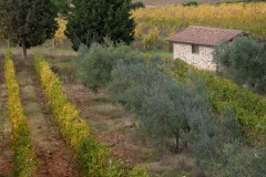 toscane-2013-1228