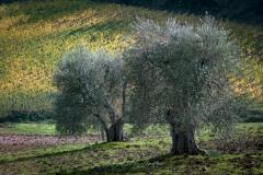toscane-2013-1267